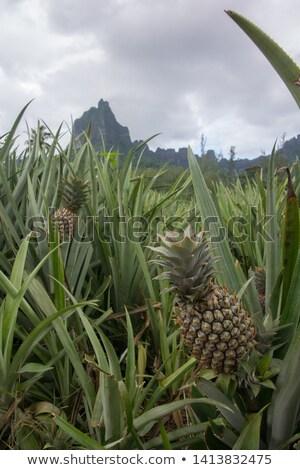 ファーム · インテリア · 島 · フランス語 · ポリネシア · 空 - ストックフォト © danielbarquero