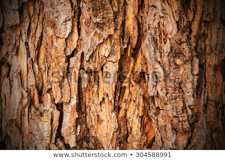 Fa ugatás közelkép fából készült textúra természet Stock fotó © dezign56