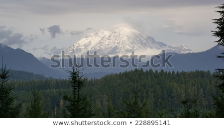 Hazy Atmospheric Conditions National Forest Mt Rainier Stock photo © cboswell