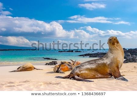 Volcanic Coast in the Galapagos Stock photo © wildnerdpix