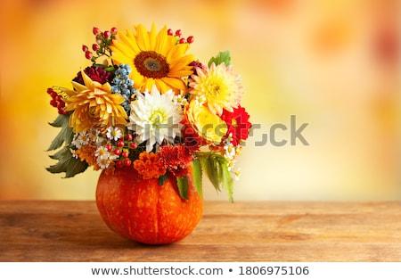 crisantemo · primavera · belleza · color · rosa - foto stock © manera