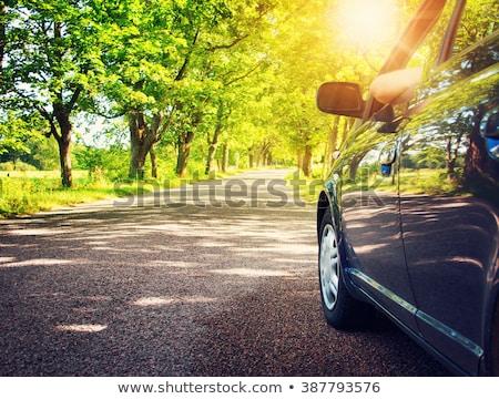 estrada · de · cascalho · floresta · fresco · verde · primavera - foto stock © olandsfokus