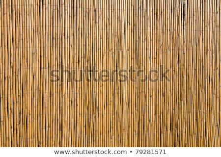 bamboo fence detail stock photo © daboost