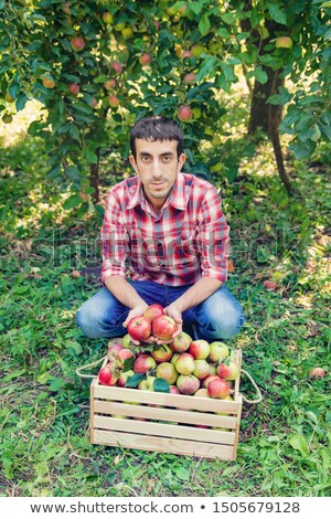 Man picking apples Stock photo © IS2