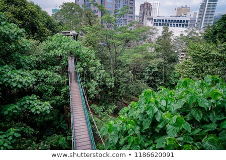 Suspension bridge over the forest in Kuala Lumpur Foto stock © galitskaya
