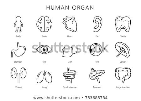 ストックフォト: Pancreas Vector Line Icons