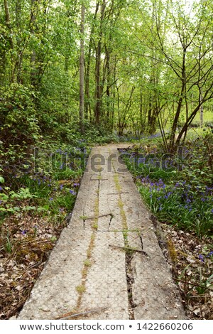 long wooden plank path leads into lush woodland in springtime stock photo © sarahdoow