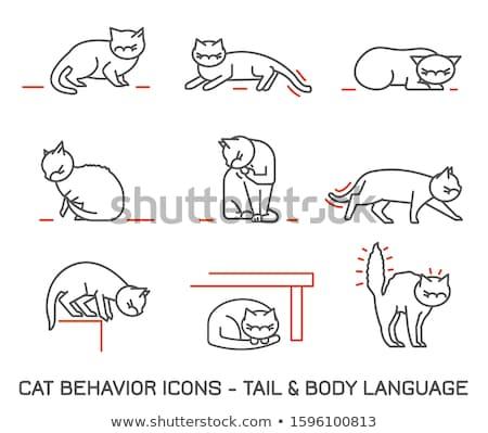 Przerażony mały kot cartoon ilustracja patrząc Zdjęcia stock © cthoman