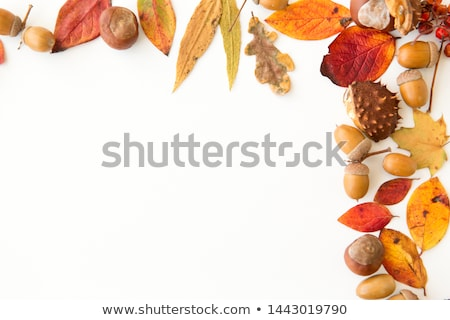 autumn leaves, chestnuts, acorns and berries frame Stock photo © dolgachov