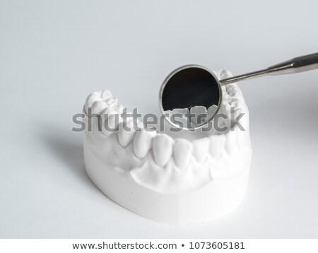 Plaster teeth Stock photo © Elenarts