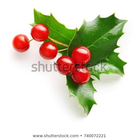 kış · beyaz · kırmızı · karpuzu · don · doğa - stok fotoğraf © krysek