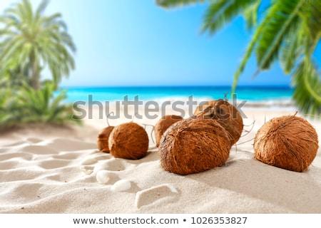 kokosnoot · strand · bruin · hemel · palm · zand - stockfoto © swisshippo