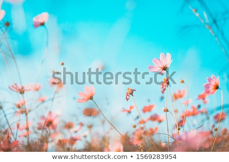 ovejas · pradera · cielo · azul · nubes - foto stock © hofmeester