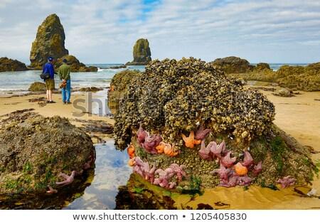 colorful starfish at low tide stock photo © wildnerdpix