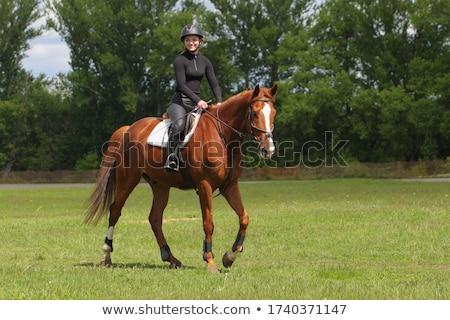 Walking horse Stock photo © look67