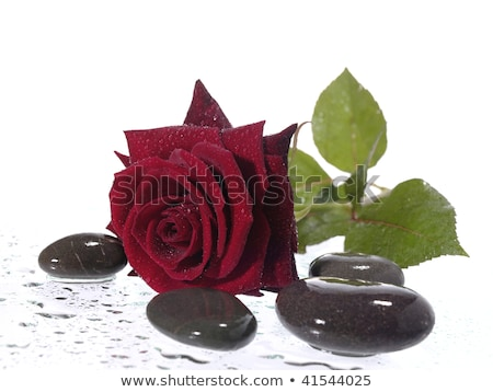 rred rose on the wet background with water droplets Stock photo © tolokonov