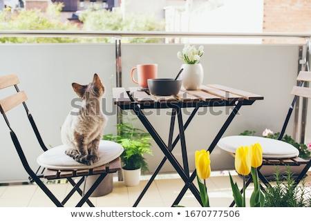 houten · bank · heldere · bloemen · tuin - stockfoto © tannjuska