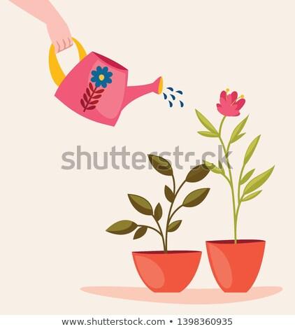 tuinieren · activiteit · landscaping · volwassen · vrouw · gesneden - stockfoto © kzenon