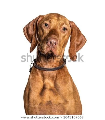 Tête chien mixte automne après-midi Photo stock © EFischen
