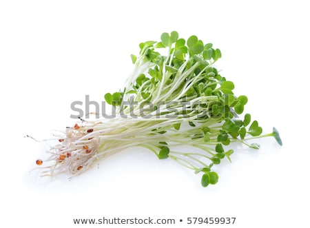 люцерна белый Сток-фото © devon