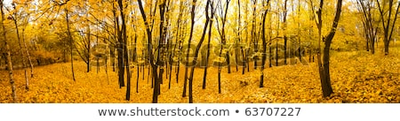 Vivid autumn panoramic landscape. Stock photo © lypnyk2