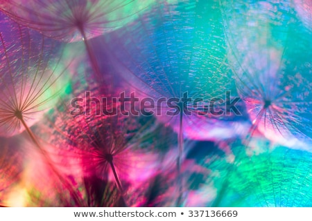Stockfoto: Kleurrijk · pastel · levendig · abstract · paardebloem · bloem