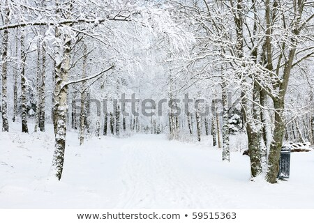 Covered snow footpath through forest Stock photo © pixachi
