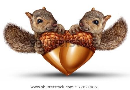 Huwelijk eekhoorn bruiloft paar dier hek Stockfoto © adrenalina