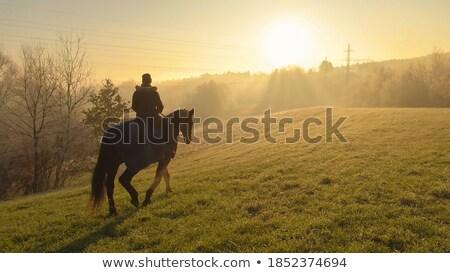 霧の 午前 太陽 公園 風景 ストックフォト © paulfleet