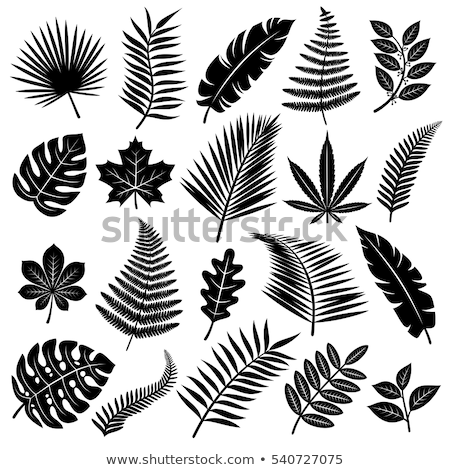 green cannabis design shape leaf design Stock photo © Zuzuan