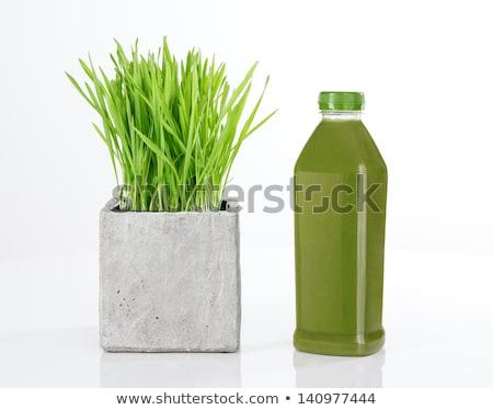 Stok fotoğraf: Fresh Green Wheat Grass In Plastic Pot