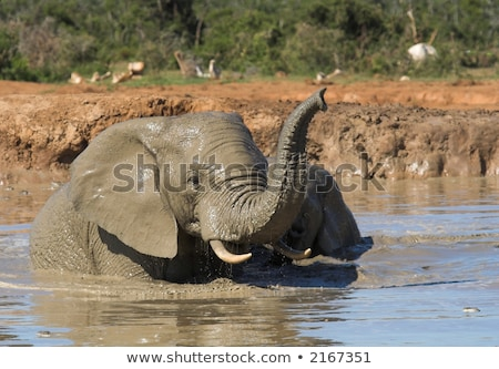 African Elephant having fun in water. stock photo © simoneeman