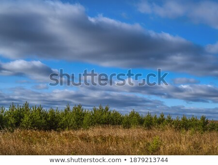 Tall Wild Grasses under Bright Blue Sky in Summer Stock photo © frannyanne
