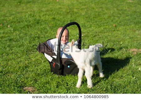 Baby in the carseat and little goat on grass play Stock photo © adamr