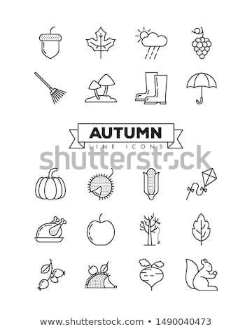 Autumn icon set. Fall leaves and berries. Nature symbol line art Stock photo © Terriana