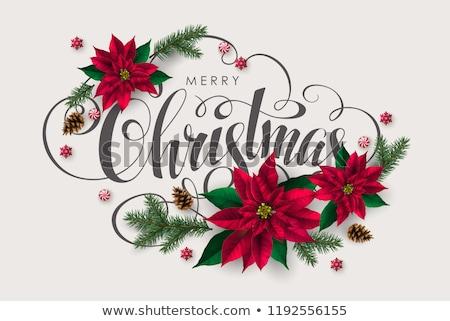 Vector wreath with poinsettia flower for Christmas Stock photo © Pravokrugulnik