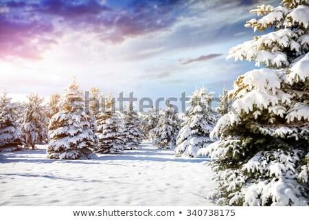 зима · мнение · снега · покрытый · деревья · гор - Сток-фото © sandralise