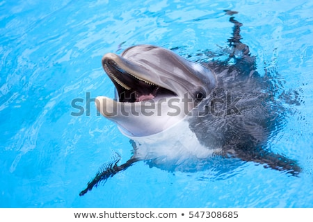 Dauphins illustration heureux nature océan wallpaper Photo stock © colematt