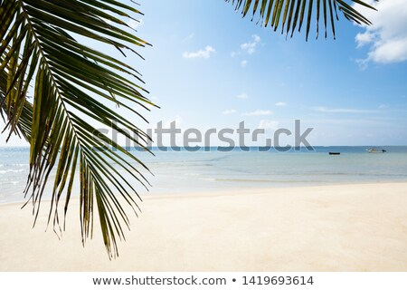Palm Leaves Turtle Bay, Mahe Island, Seychelles Stock photo © AndreyPopov