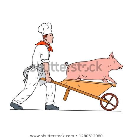 Chef Pushing Wheelbarrow and Pig Color Drawing Stock photo © patrimonio