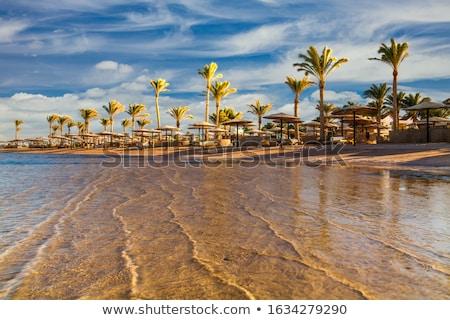 Trópusi tengerpart pálmafa utazás tengeri kilátás természet kettő Stock fotó © dolgachov