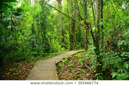 Jungle path through the Tayrona Natural National Park on the nor Stock photo © boggy
