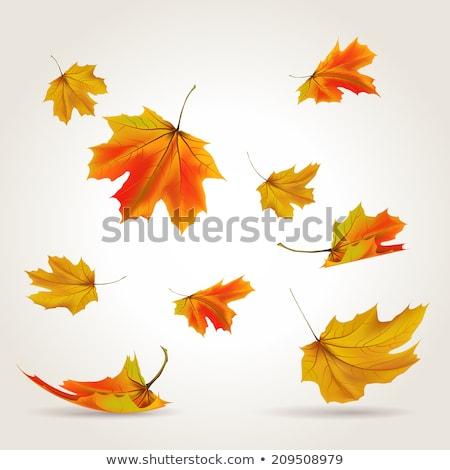 falling leaf on the ground. Fall season Stock photo © Lopolo
