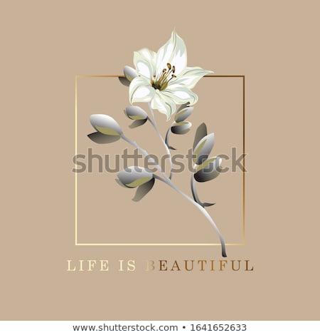 Vida hermosa postal anunciante Lily flor Foto stock © ikopylov