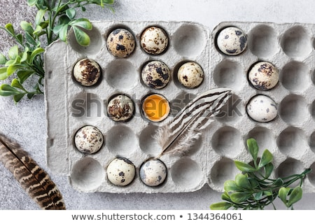 Easter eggs with feather on white and gray background with space for text. Wide composition. Easter  Stock photo © user_15523892