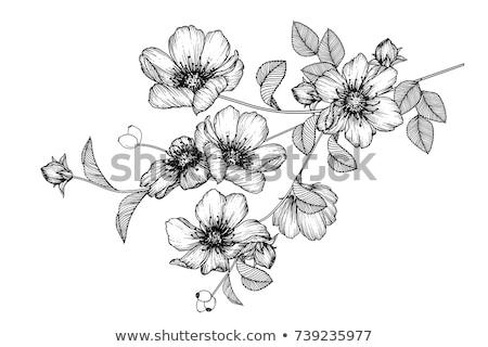 Valentinsdag · Hand · Zeichnung · floral · Stelle · Text - stock foto © Elmiko
