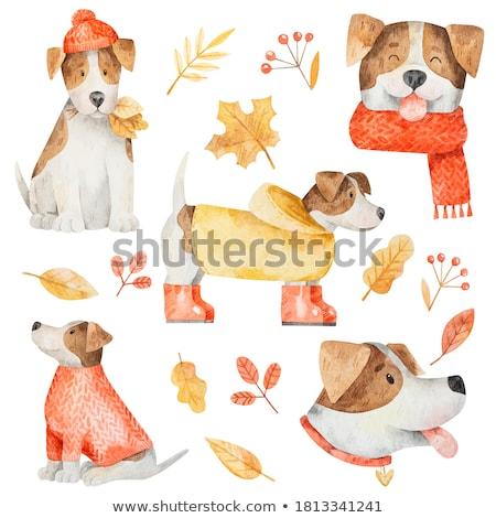 Сток-фото: смешные · Cartoon · собака · набор · изолированный · белый