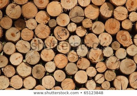 Wyschnięcia posiekane drewno opałowe w górę górę Zdjęcia stock © dacasdo