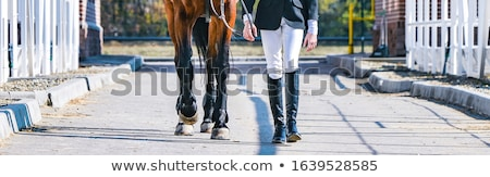 Mooie kleur springen paard symbool 2014 Stockfoto © Elmiko