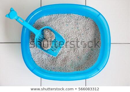 кошки · песок · черпать · белый · натрий · фон - Сток-фото © smuay